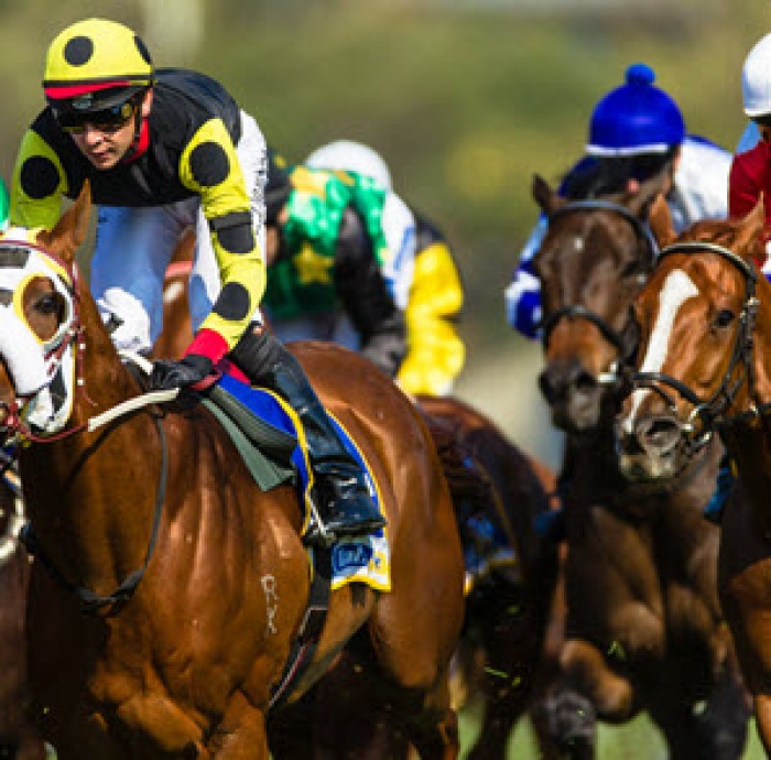 Expert Horse Racing Tips | 2019 May 18th – May 24th | Reading The Play